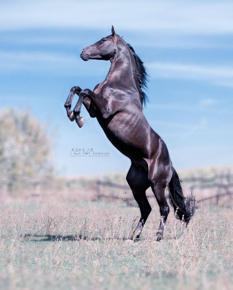 лошади в дыбах картинки погода ясное небо