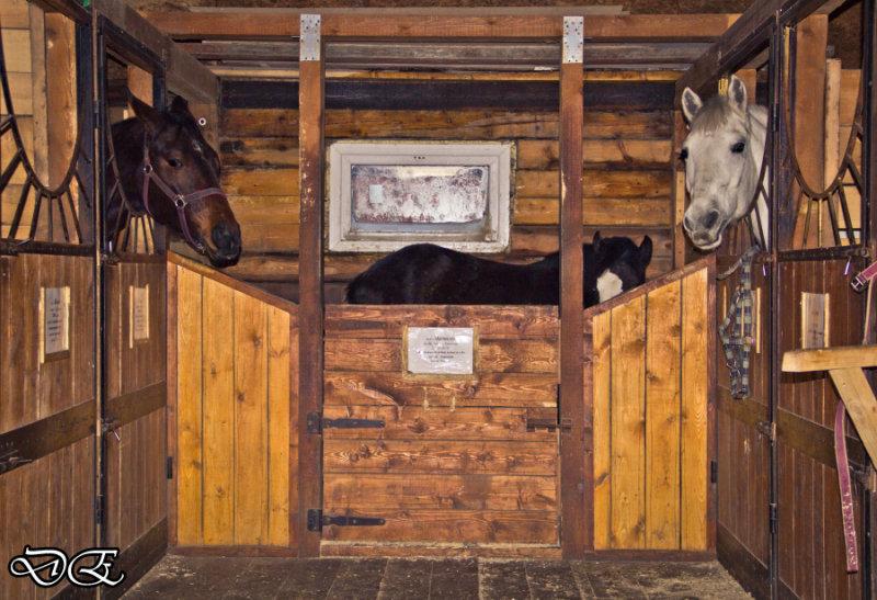 Денники для лошадей своими руками 397