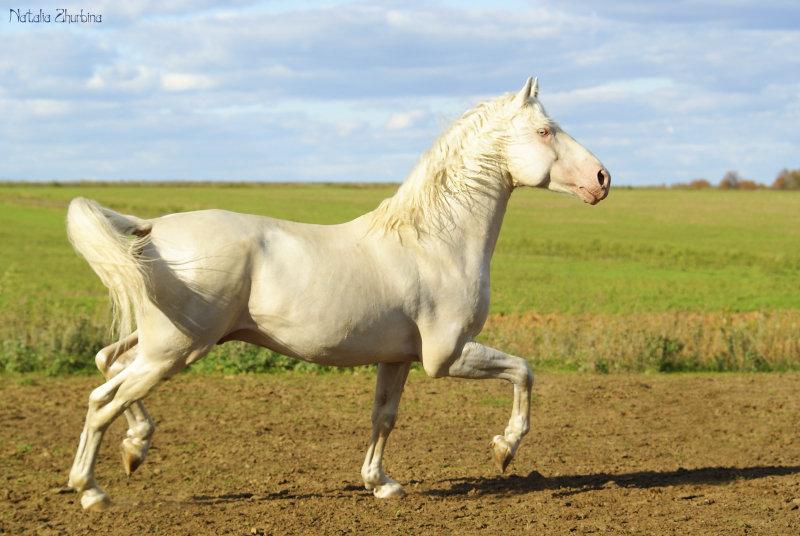 http://www.equestrian.ru/photos/user_photo/2012/f1f784bc.jpg
