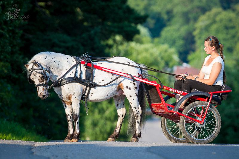 Аладин. - фотографии - equestrian.ru.