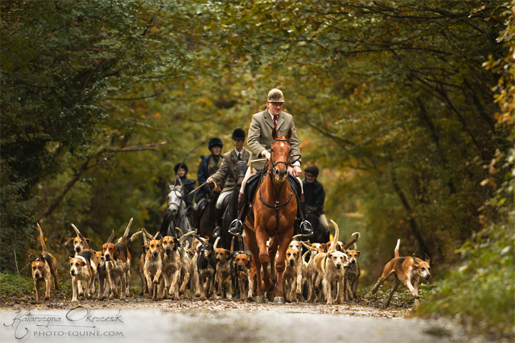 Fox hunting in England