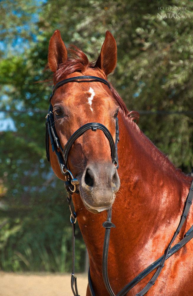 Фото бега лошади