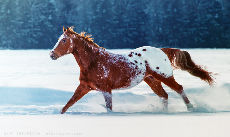 https://www.equestrian.ru/photos/user_photo/2013/eb0b8a01.jpg