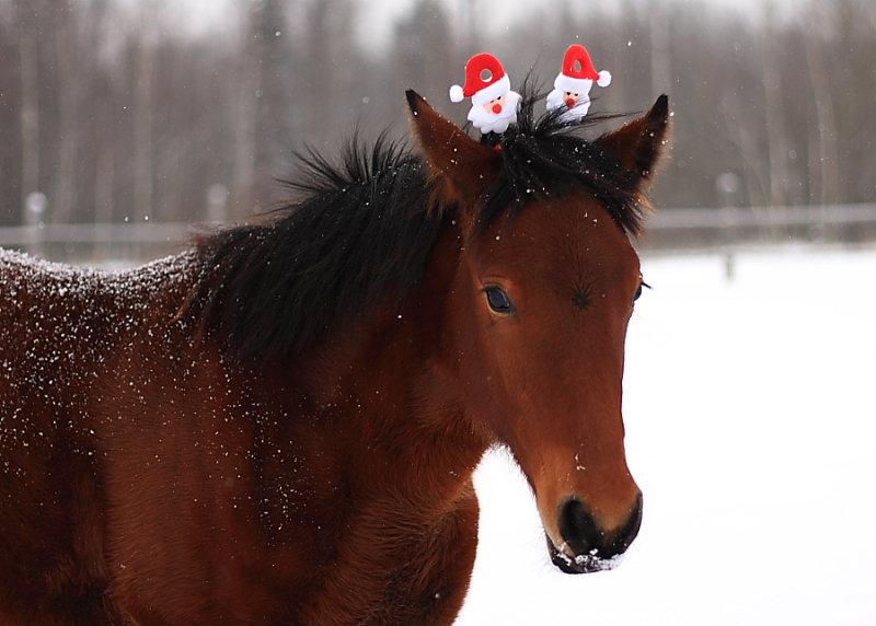 Картинки новый год лошадь, день рождения