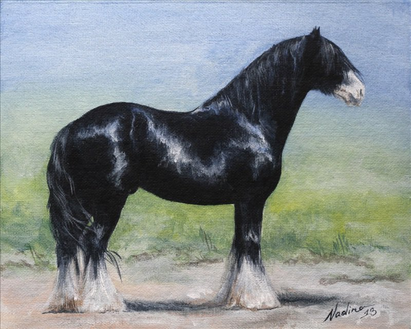 Gipsy Cob stallion akril holst 25x20