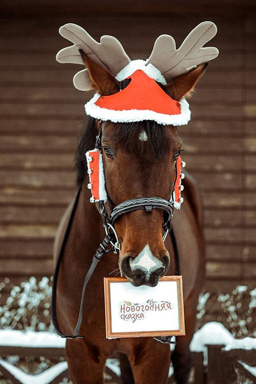 Рисунок смешные, новогодние картинки с лошадьми
