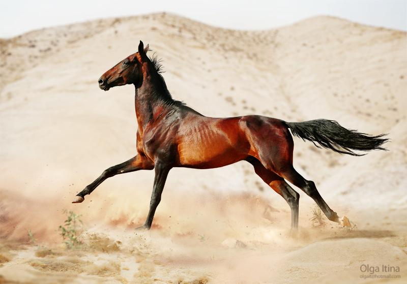 Shutterstock  Фотобанк Продажа фото