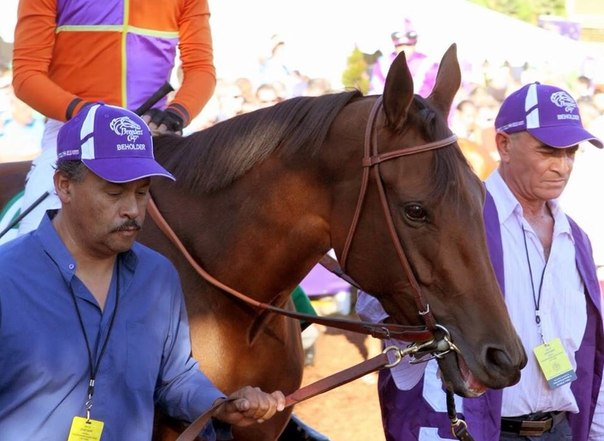 Ипподром Santa Anita Park 2013 год, скачка Breeders' Cup Distaff