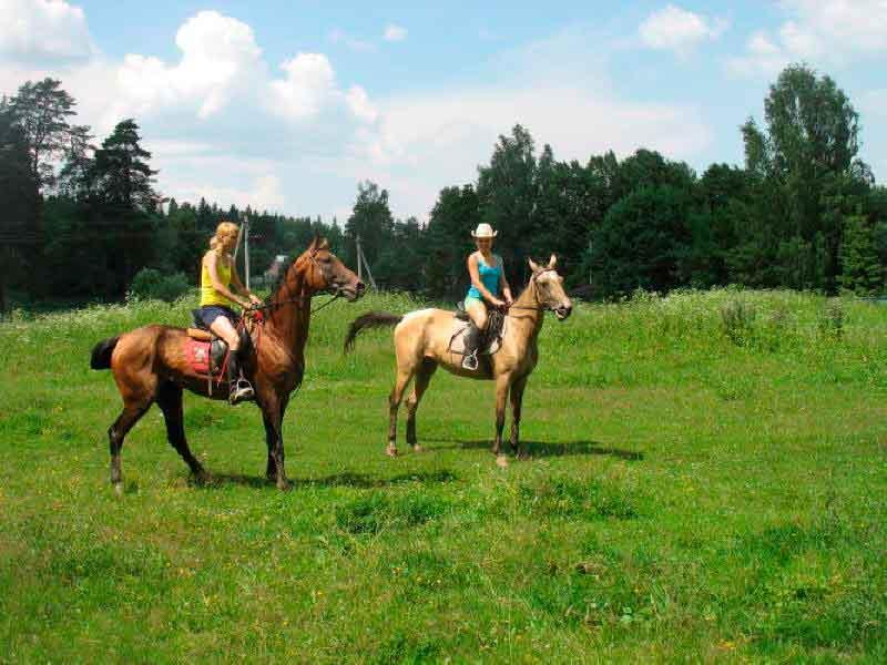Форуме лошади и верховая езда на портале е1ru