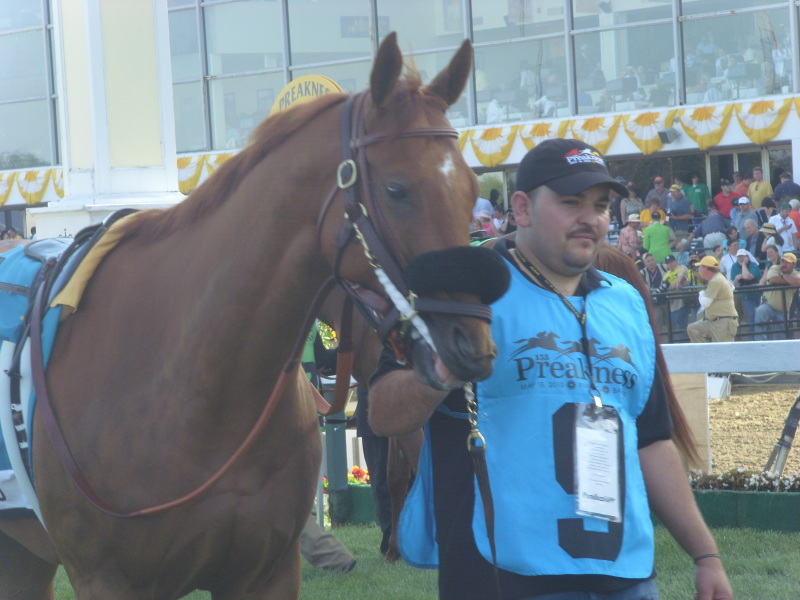 �������� Pimlico 2010 ���, ������ ���� ������� ������ - Preakness Stakes - Gr. 1