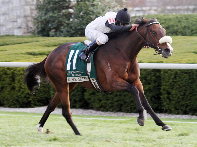 Ипподром Keeneland 2009 год, скачка Rood and Riddle Dowager Stakes