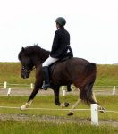 typical icelandic horse trot...:)