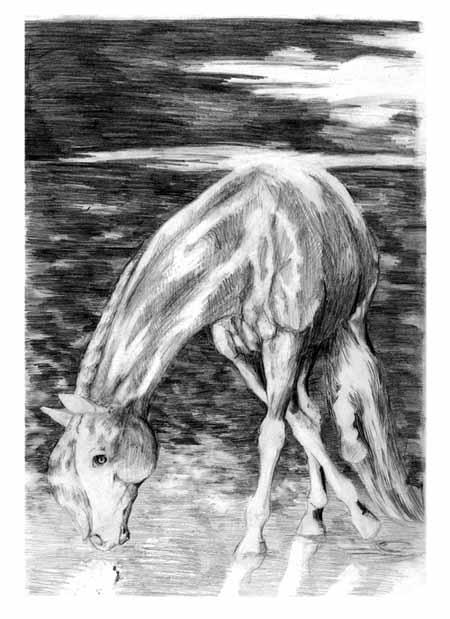 http://equestrian.ru/photos/user_photos/a_0a1a79.jpg