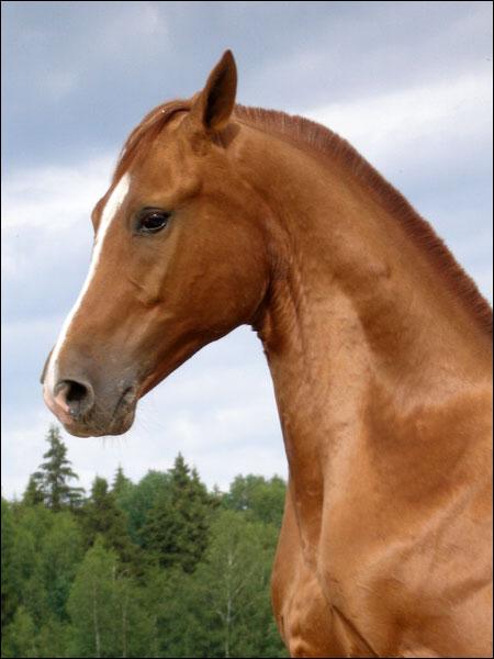 http://www.equestrian.ru/photos/user_photos/a_0f3026.jpg