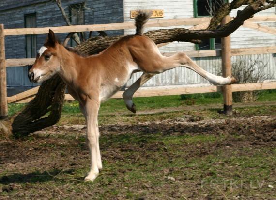 http://www.equestrian.ru/photos/user_photos/a_1bb7b6.jpg