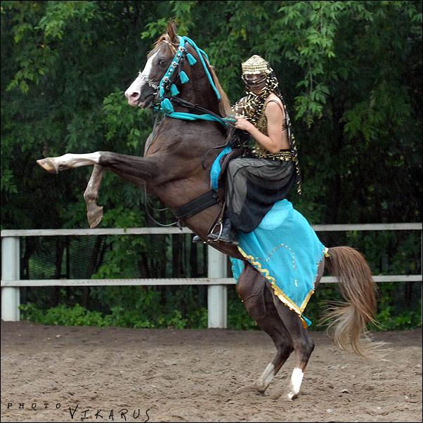 http://www.equestrian.ru/photos/user_photos/a_22ca99.jpg