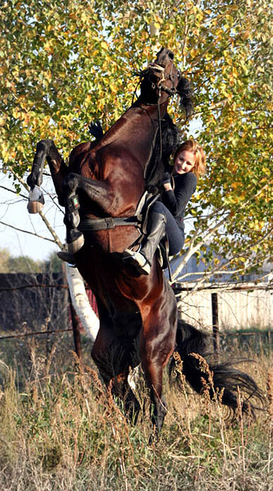 http://www.equestrian.ru/photos/user_photos/a_22ee1f.jpg