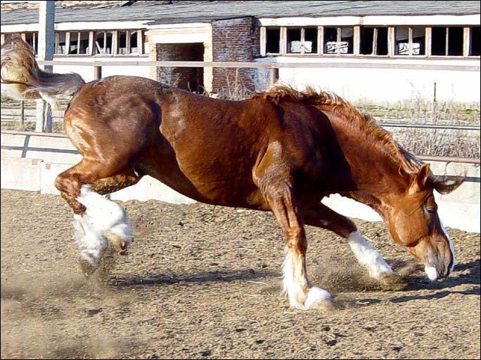 http://www.equestrian.ru/photos/user_photos/a_246374.jpg