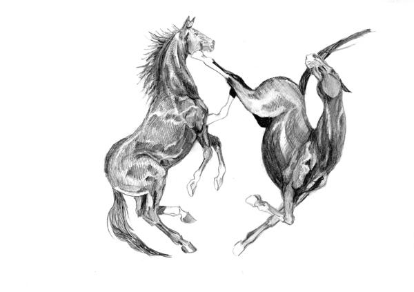 http://equestrian.ru/photos/user_photos/a_24edb4.jpg