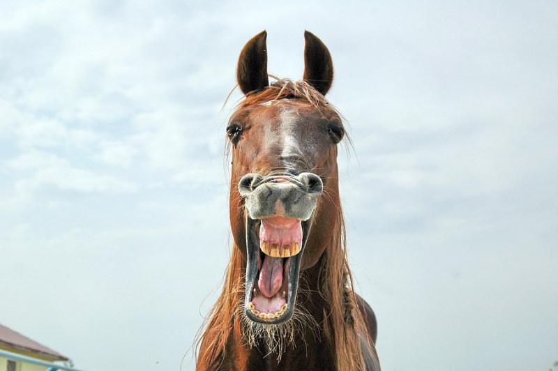 http://www.equestrian.ru/photos/user_photos/a_2643c4.jpg