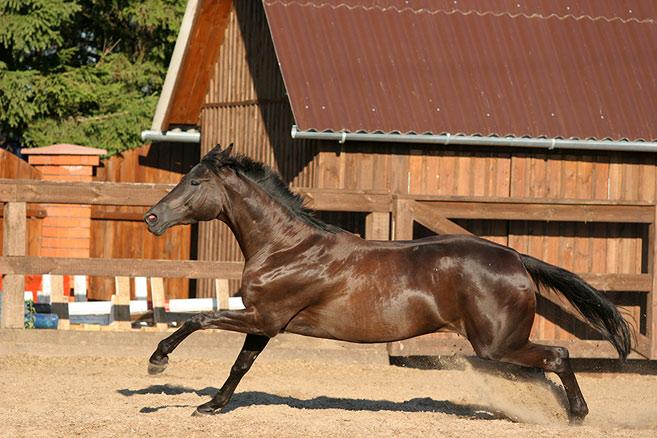 породы скаковых лошадей фото дополнением семейному