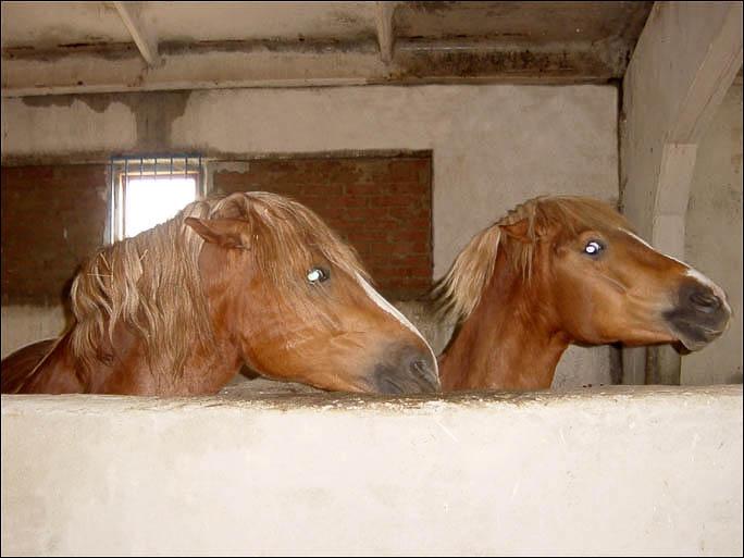 http://www.equestrian.ru/photos/user_photos/a_2db5cd.jpg