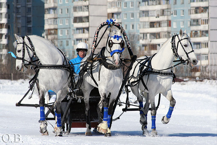 http://www.equestrian.ru/photos/user_photos/a_401870.jpg