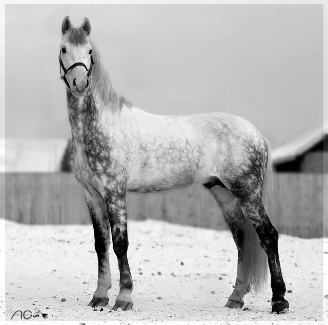 http://www.equestrian.ru/photos/user_photos/a_46dfb4.jpg