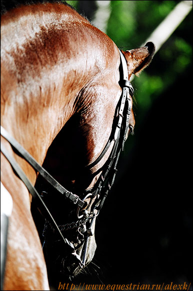 http://www.equestrian.ru/photos/user_photos/a_498337.jpg