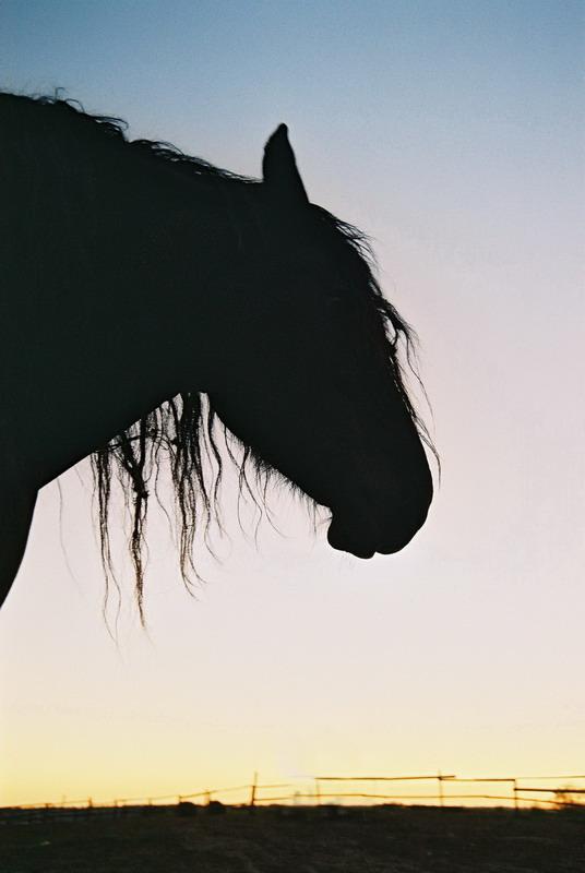 http://www.equestrian.ru/photos/user_photos/a_4caef1.jpg