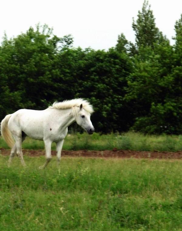 кск лошади фото