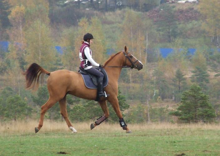 http://www.equestrian.ru/photos/user_photos/a_5a7413.jpg