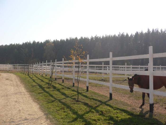 http://www.equestrian.ru/photos/user_photos/a_5b077b.jpg