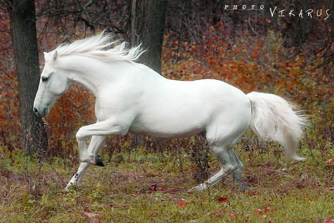 http://www.equestrian.ru/photos/user_photos/a_623bc9.jpg