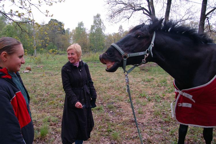 http://www.equestrian.ru/photos/user_photos/a_6c172e.jpg