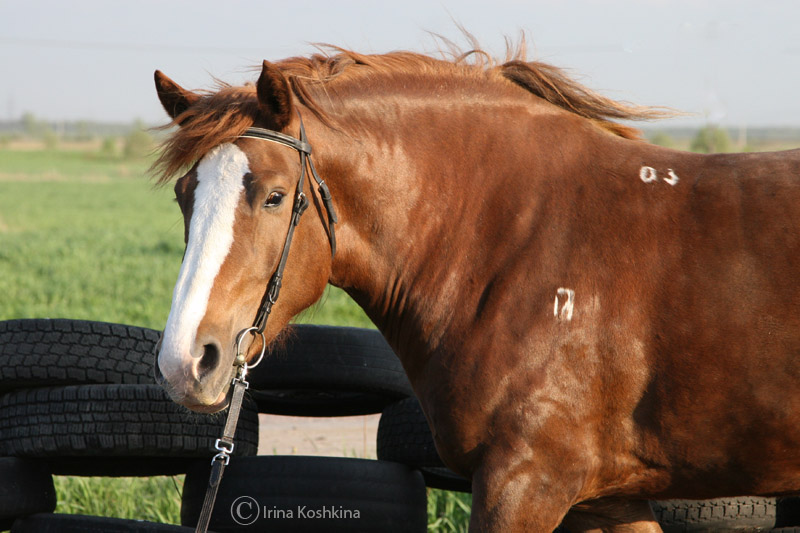 http://www.equestrian.ru/photos/user_photos/a_7b22d9.jpg