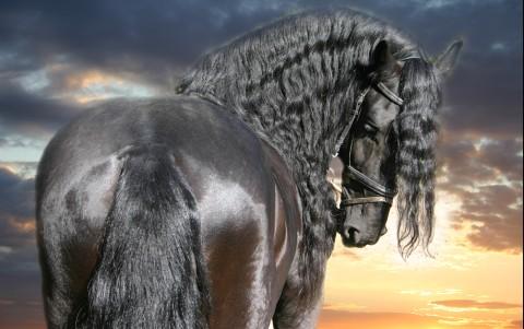 http://www.equestrian.ru/photos/user_photos/a_7c02d0.jpg
