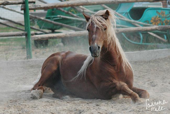 http://www.equestrian.ru/photos/user_photos/a_7e453b.jpg