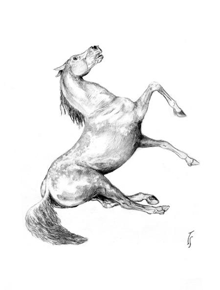 http://www.equestrian.ru/photos/user_photos/a_7f9b8a.jpg