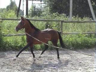 http://www.equestrian.ru/photos/user_photos/a_844065.jpg