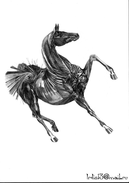 http://equestrian.ru/photos/user_photos/a_932976.jpg