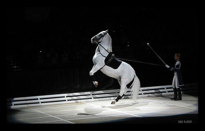 http://www.equestrian.ru/photos/user_photos/a_a94bc7.jpg