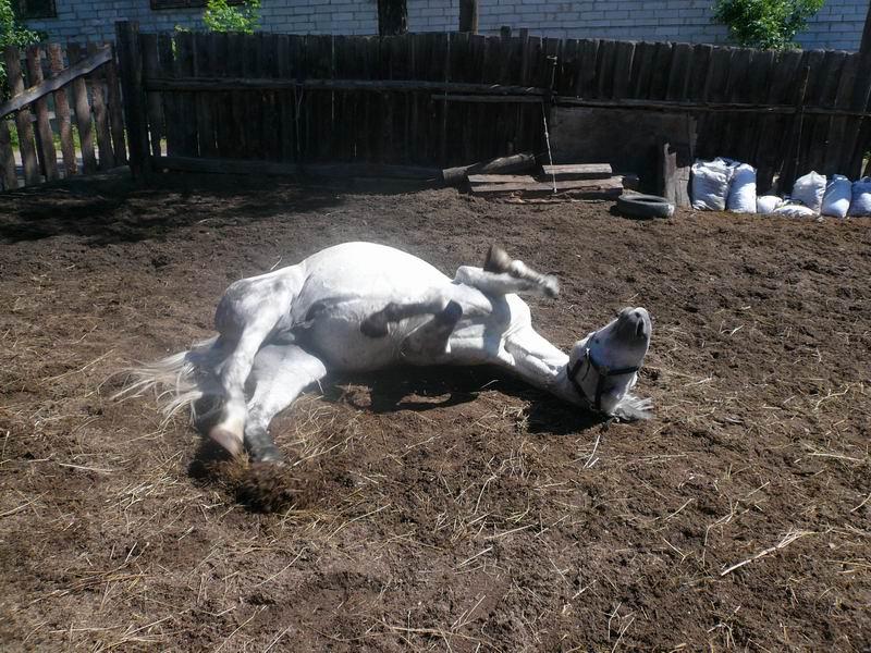 http://www.equestrian.ru/photos/user_photos/a_af9b04.jpg
