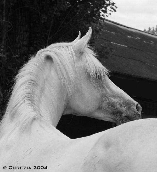 http://www.equestrian.ru/photos/user_photos/a_b260de.jpg