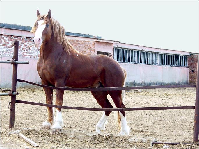 http://www.equestrian.ru/photos/user_photos/a_b4cc8d.jpg