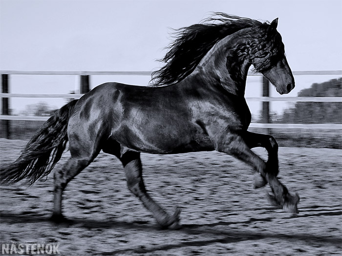 http://www.equestrian.ru/photos/user_photos/a_b63b9d.jpg