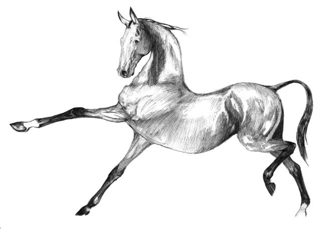 http://equestrian.ru/photos/user_photos/a_ba72f0.jpg