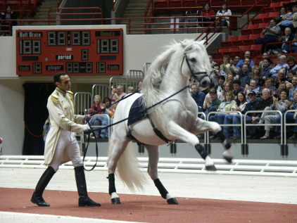 http://www.equestrian.ru/photos/user_photos/a_cb642a.jpg