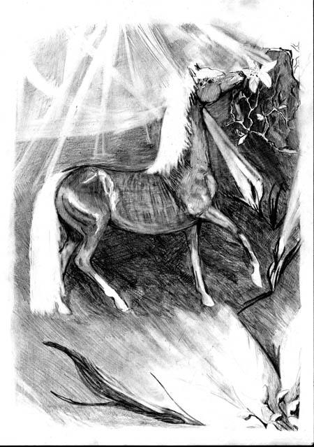 http://equestrian.ru/photos/user_photos/a_cde4e1.jpg