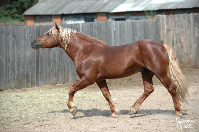 http://www.equestrian.ru/photos/user_photos/a_d5d490.jpg